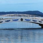 Salmon on the bridge